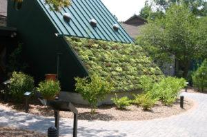 Зеленая крыша своими руками
