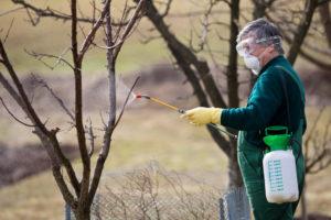 Обработка сада от вредителей: особенности весенней обработки