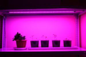 Освещение рассады светодиодной лентой