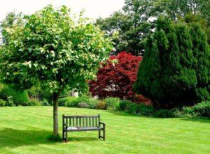 Деревья для ландшафтного дизайна. Посадка деревьев и ландшафтный дизайн