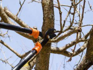 Обрезка плодовых деревьев: правила и рекомендации