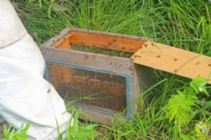 Как сделать ловушку для пчел своими руками, чертеж ловушки для пчел. Как поймать рой в ловушку
