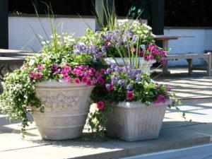Какие цветы выбрать для посадки в вазоны