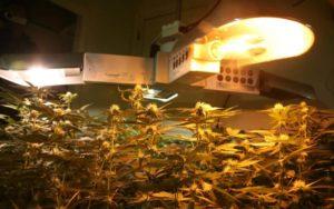 Какие лампы лучше подходят для выращивания растений?