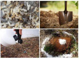 Как бороться с муравьями на садовом участке