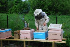 Уход за пчелами весной: особенности первого ухода