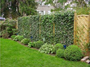 Как сделать живую изгородь на дачном участке
