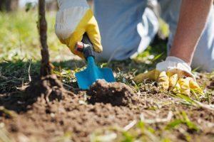 Удобрения для сада: особенности весенней подкормки растений в саду