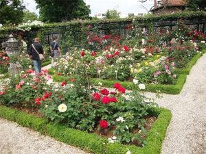 Розарий в саду своими руками