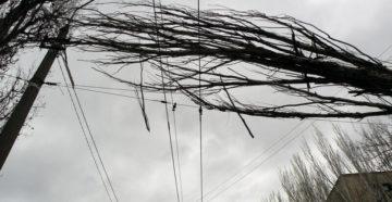 Что делать, если дерево упало на провода?